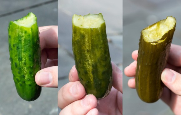 Three pickles from The Pickle Guys